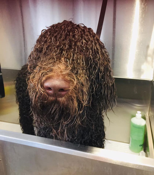 Dog in bath in groomers in Norwich