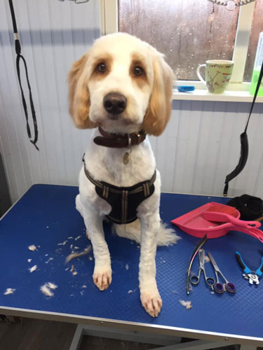 Dog in groomers in Norwich