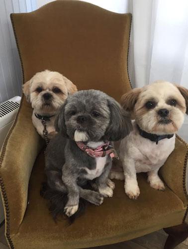 Dogs in groomers in Norwich