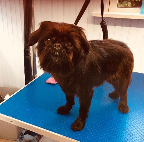 Dog in groomers in Norwich